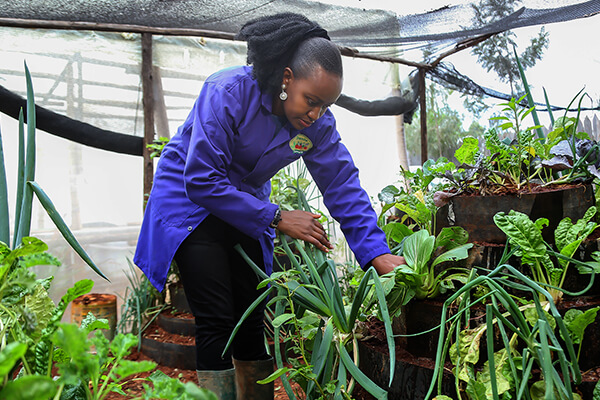 Shamba Connect: Growing small gardens with big benefits